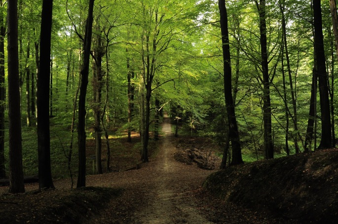 bron: http://lynnblogt.blogspot.com