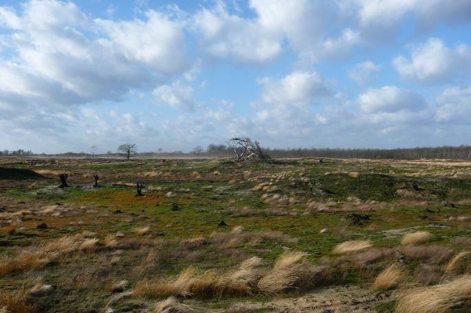 foto 't Is Voor Niks-loop 2012 (zelf getrokken)