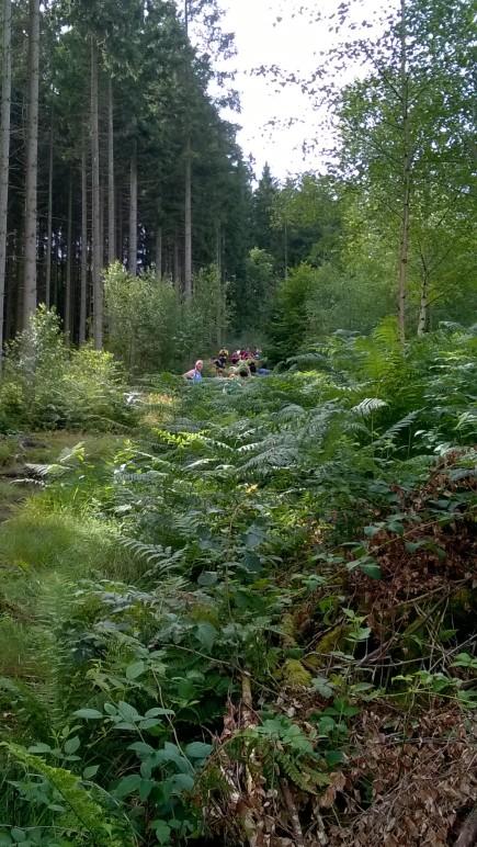 af en toe lijk je in een oerwoud te lopen